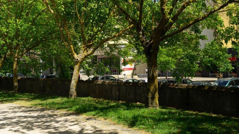 Baum zwei eines Gartens lizenzfreie stockfotos