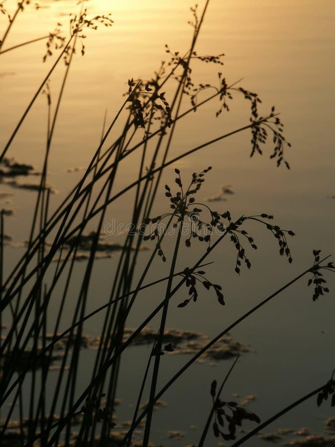 bauman Illinois jeziora park zdjęcia stock