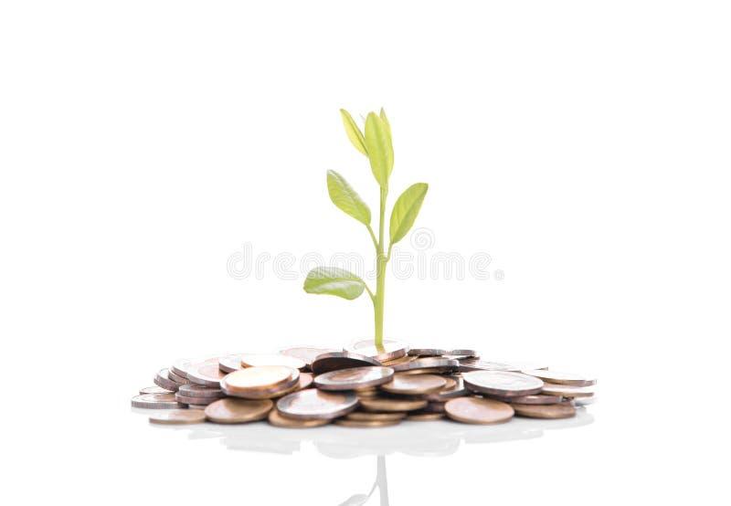 Baumanlage, die auf Goldstapelmünzen wächst Konzept-Investitionsgeld lizenzfreie stockfotografie