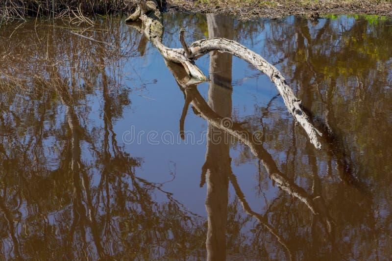Baumast, der auf dem natürlichen Teich, reflektierend in Brown-Wasser liegt stockbild