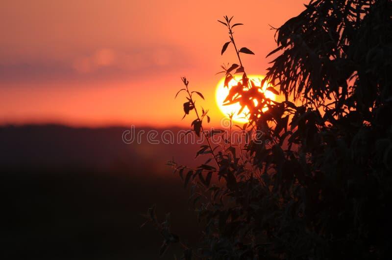 Baumast gegen den Hintergrund der untergehenden Sonne stockfoto