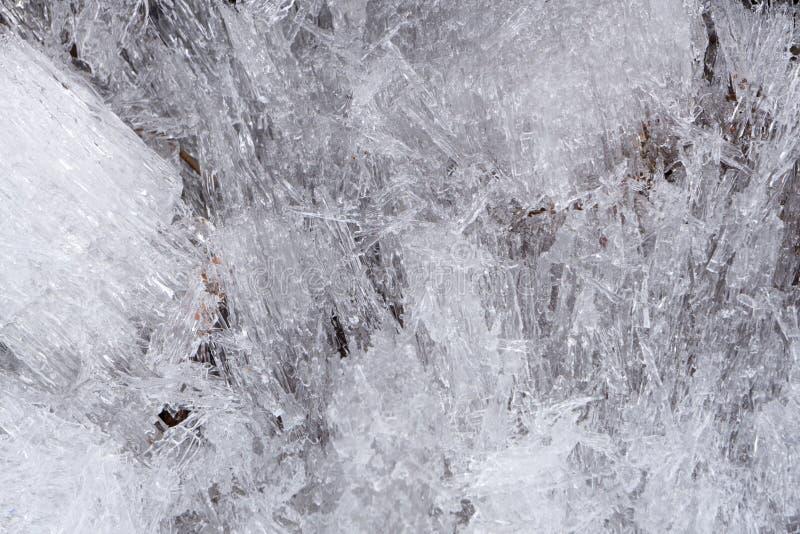 Baumast mit Eiszapfen Nahaufnahme des Eises auf einem Baum Nahaufnahme von den Eiszapfen, die von der Niederlassung von Thuja hän stockbilder