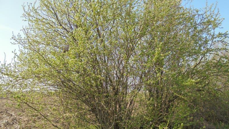 Baumaste, die mit grünem Leben überlaufen lizenzfreies stockfoto