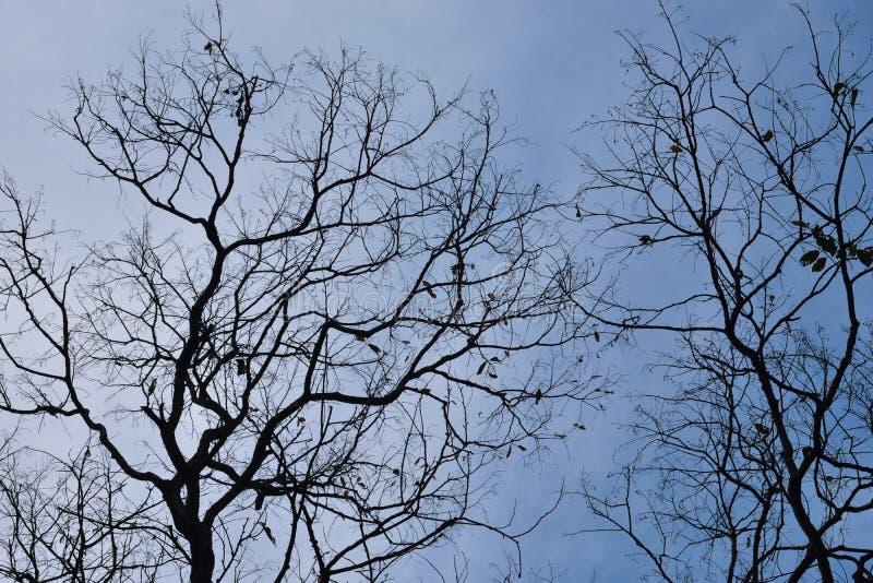 Baumaste gegen den Himmel Feenhafter düsterer Wald stockfotos