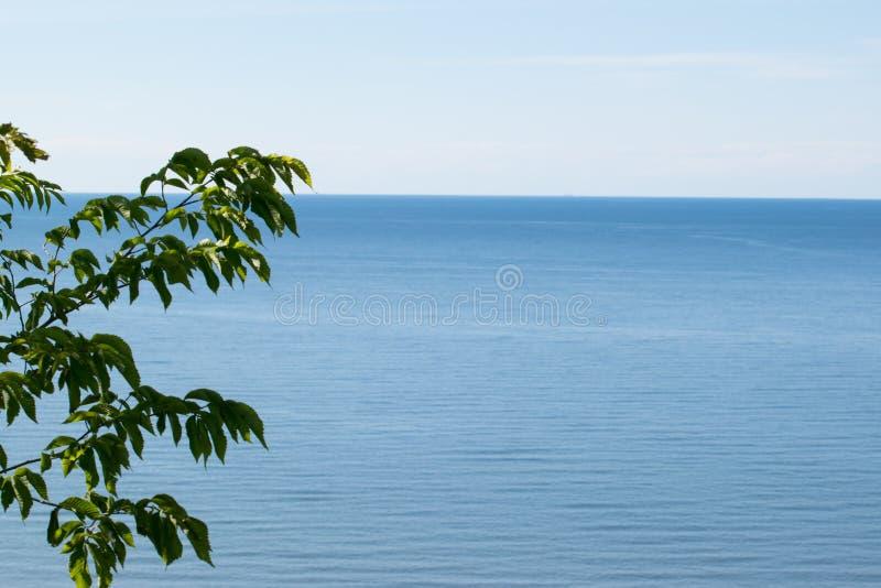 Baumaste mit Seeansicht in den Hintergrund lizenzfreie stockfotografie