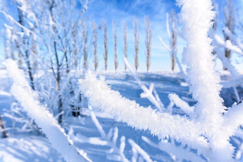 Baumaste umfasst mit starker Schicht des Schnees Gegen den blauen Himmel an einem sonnigen Tag stockfotografie