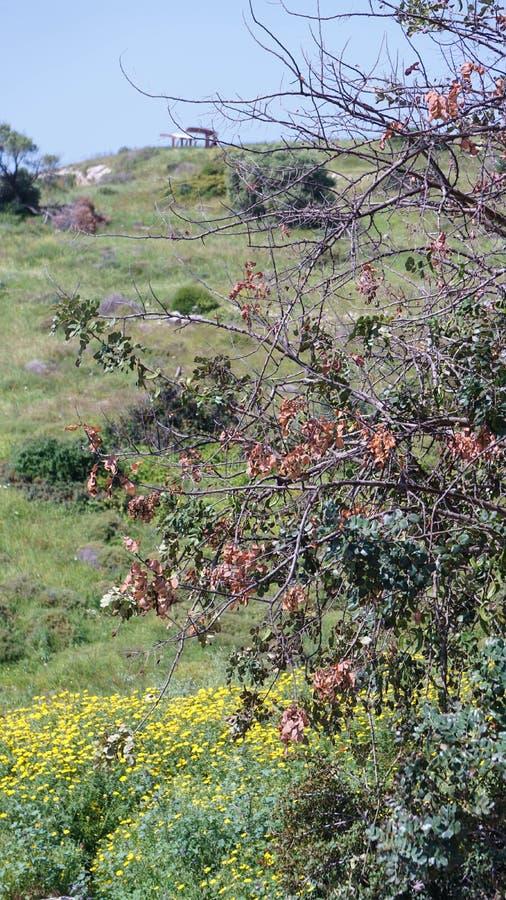 Baumastlaubblätter gestalten Zypern landschaftlich stockfotos