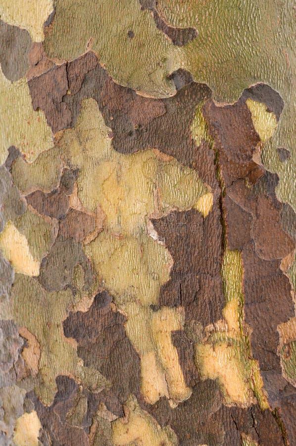 Baumbeschaffenheit stockfotos