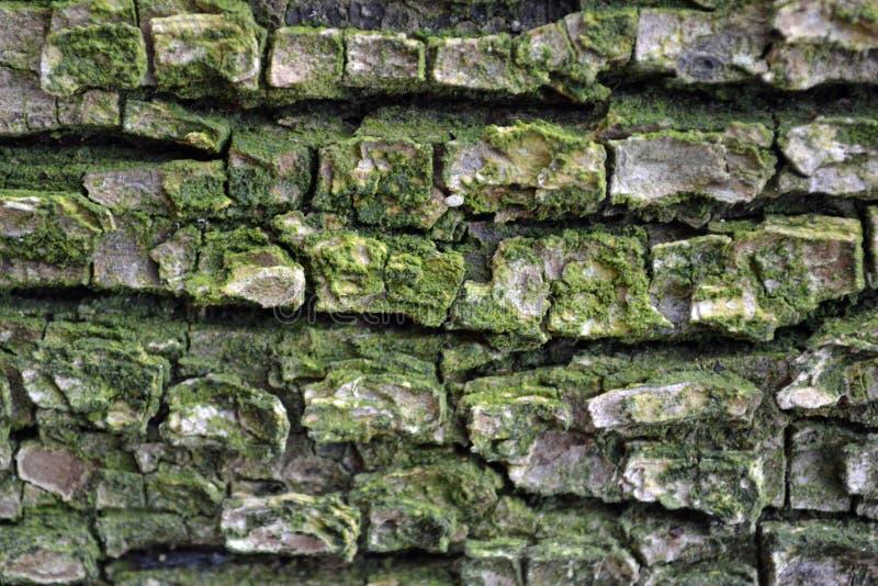 Baumbeschaffenheit mit grüner Farbe und Geraden stockbild
