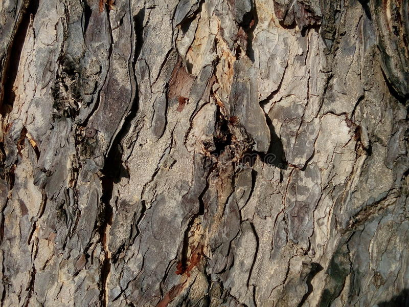 Baumbeschaffenheits-Braun roguh stockfotografie