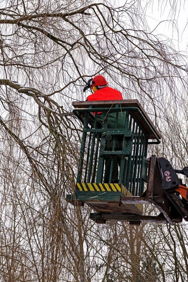 Baumbeschneidung, Holzfäller mit einer Kettensäge auf einer erhöhten Arbeit pl lizenzfreie stockfotos