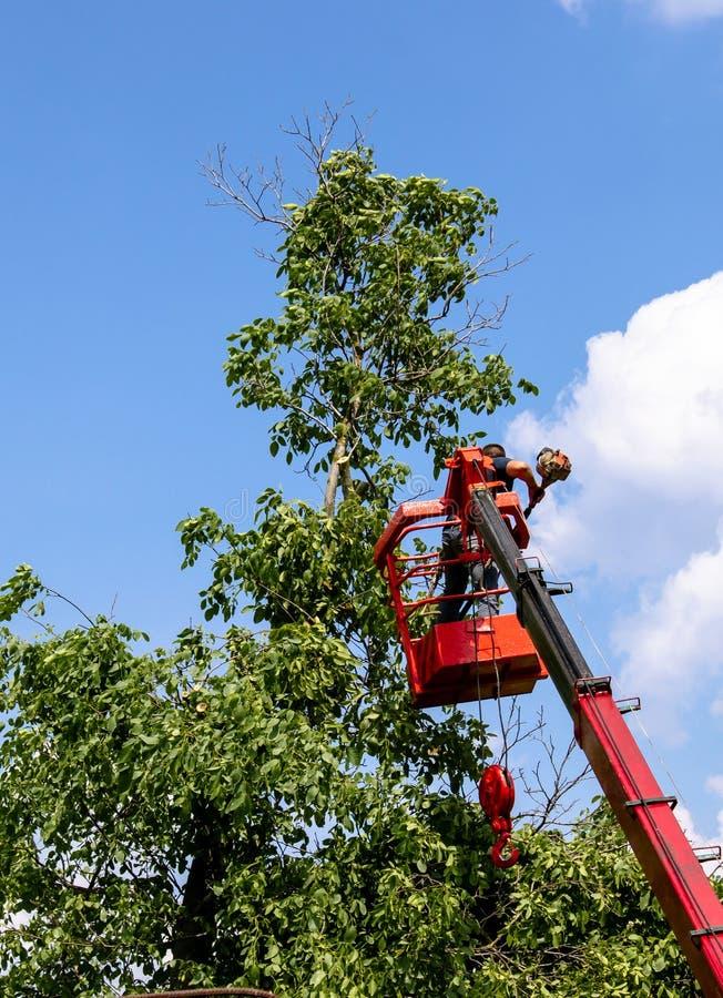Baumbeschneidung und S?gen durch einen Mann mit einer Kettens?genstellung auf der Plattform eines mechanischen Sesselliftes stockbilder