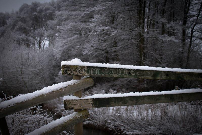 Baumbrücke in Schweden stockbild