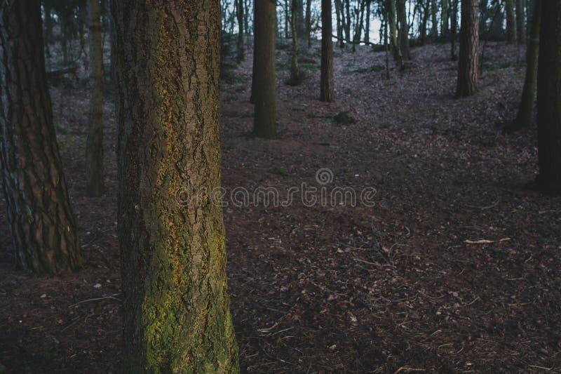 Baumdetail im Herbstwald lizenzfreie stockbilder