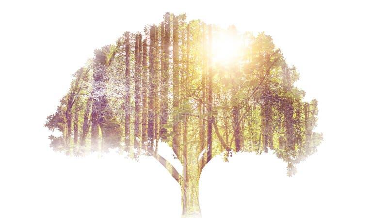 Baumdoppelbelichtung stockbilder