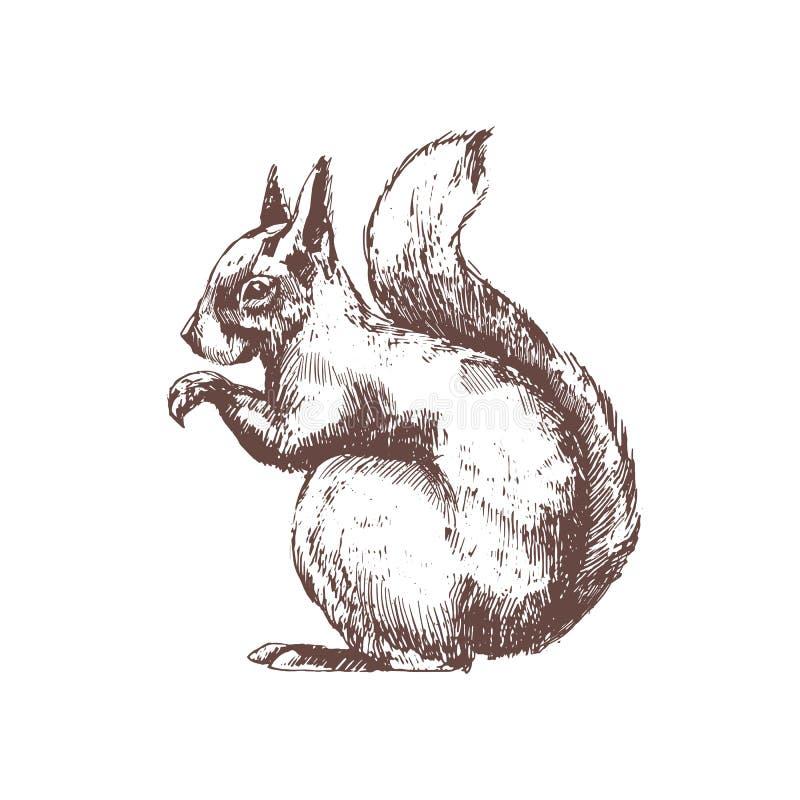 Baumeichhörnchenhand gezeichnet mit Tiefenlinien auf weißem Hintergrund Einfarbige Skizzenzeichnung des wilden Waldnagetiertieres lizenzfreie abbildung