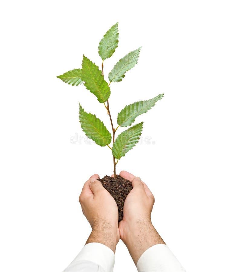 Baumeintragfaden in den Händen lizenzfreie stockfotografie