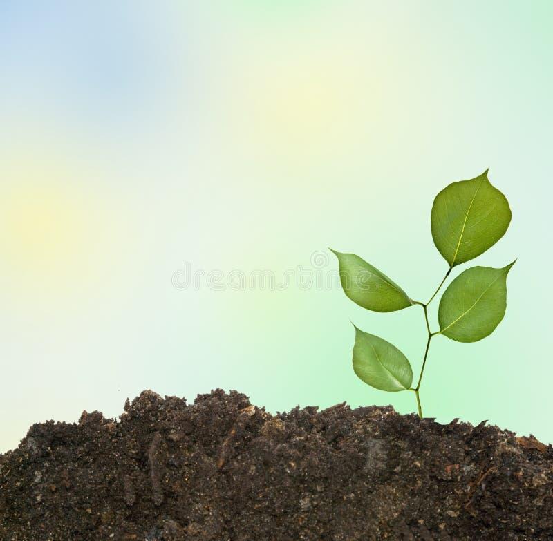 Baumeintragfaden in der Erde stockbilder