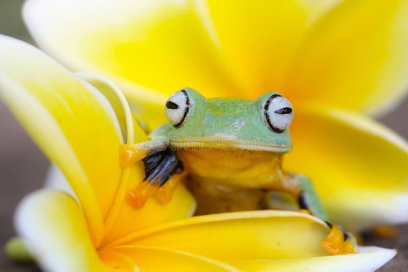 Baumfrösche, Baumfrösche und gelbe Wildflowers stockfotos