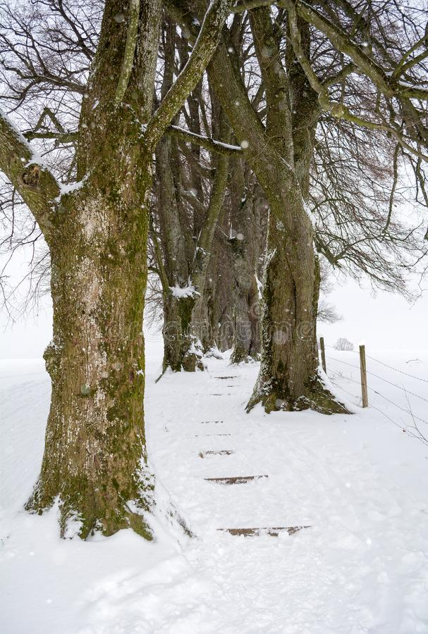 Baumgasse im Winter umfasst mit Schnee in Holzkirchen, Bayern, Deutschland lizenzfreie stockbilder