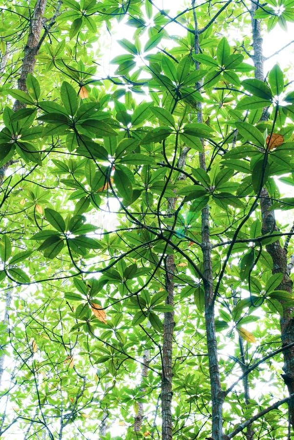 Baumgrünblätter erneuern Hintergrund, im Wald von der Unterseite lizenzfreies stockfoto