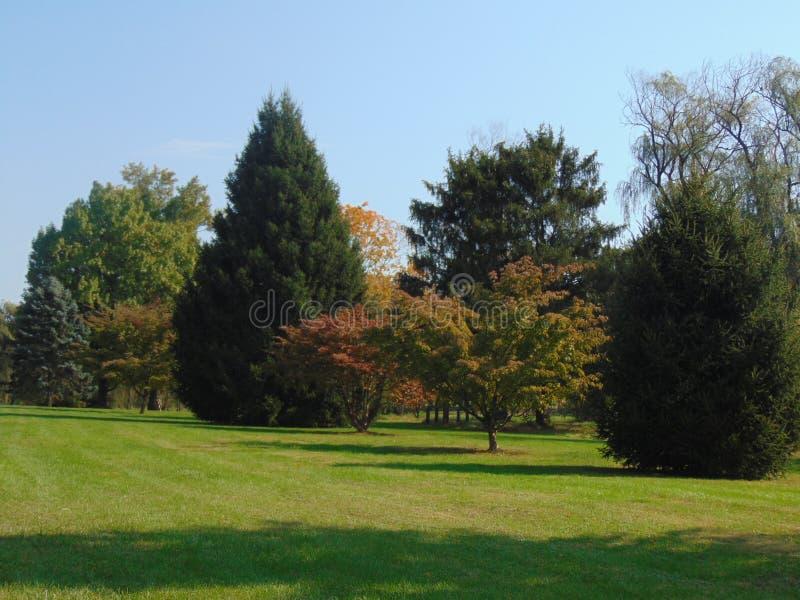 Baumgrenze lizenzfreies stockbild