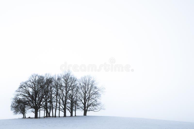 Baumgruppe auf einem Hügel im kalten Winter stockbild