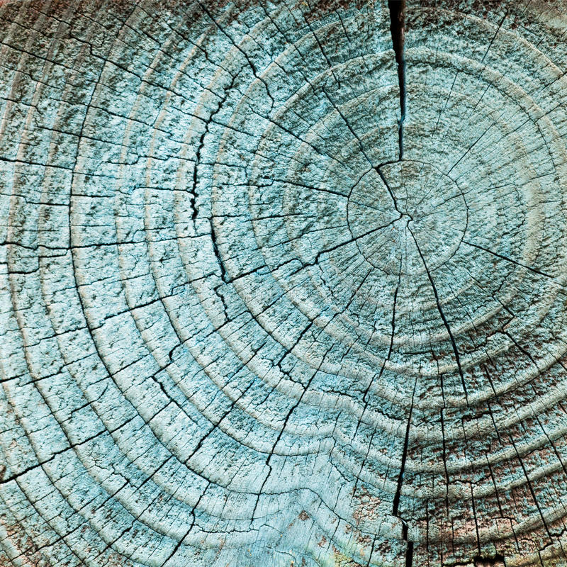 Baumholzringe lizenzfreies stockbild