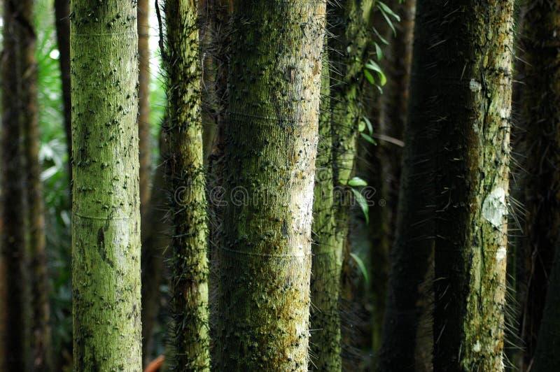 Download Baumkabel stockbild. Bild von schön, gärten, schatten, kabel - 853287