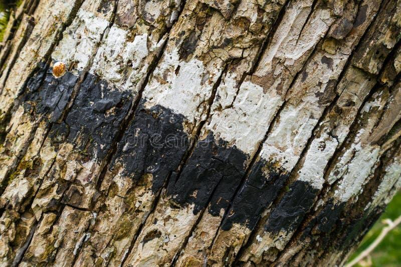 Baumklotzdetail markiert mit einem touristischen Weg lizenzfreie stockfotos