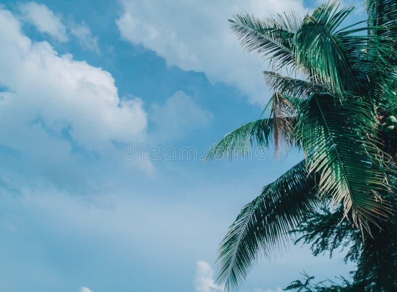 Baumkokosnuß auf Wolke stockfotografie