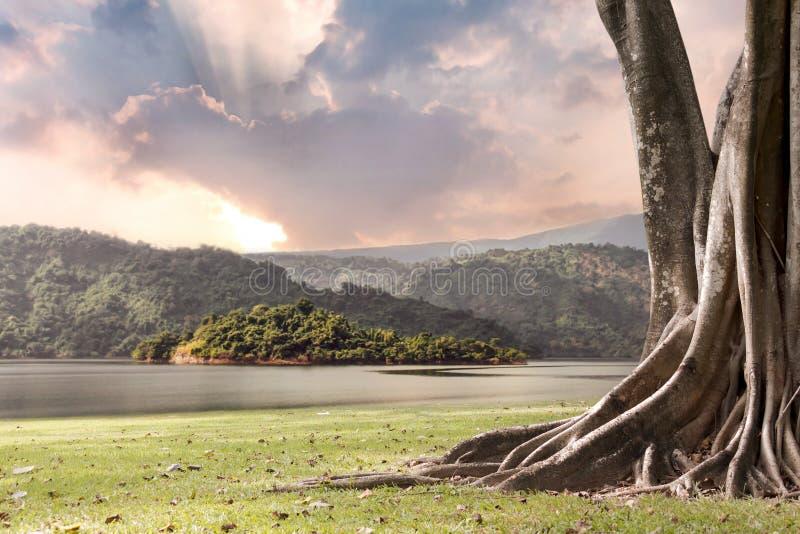 Baumlandschaft mit Stamm und Wurzeln, die heraus schönes auf Grasgrün mit Bergen und Flussnaturhintergrund mit Wolken verbreiten stockfotografie