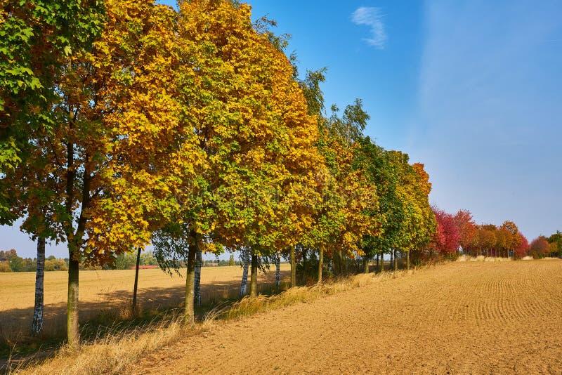 Baumlinie im Herbst lizenzfreie stockfotos