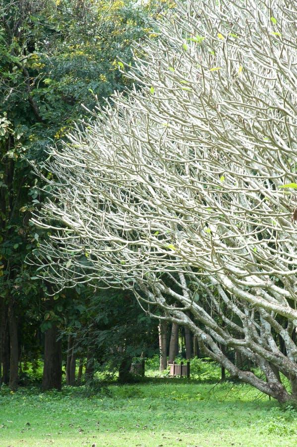 Baummuster im Garten. lizenzfreie stockbilder