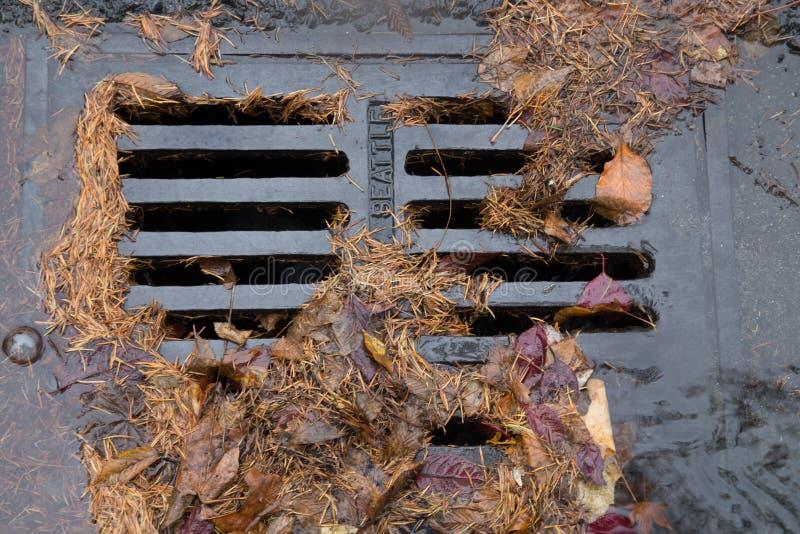 Baumnadeln, die einen Gully verstopfen lizenzfreies stockfoto
