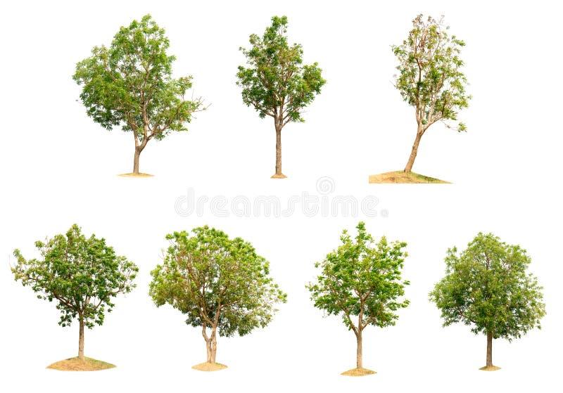 Baumnatur von lokalisiert stockfotografie