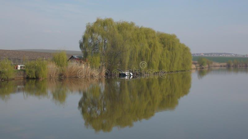 Baumreflexion auf einem See in Rumänien lizenzfreie stockfotografie