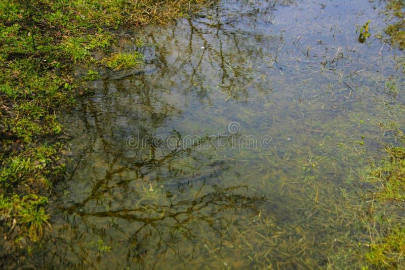 Baumreflexion im Wasser lizenzfreies stockbild