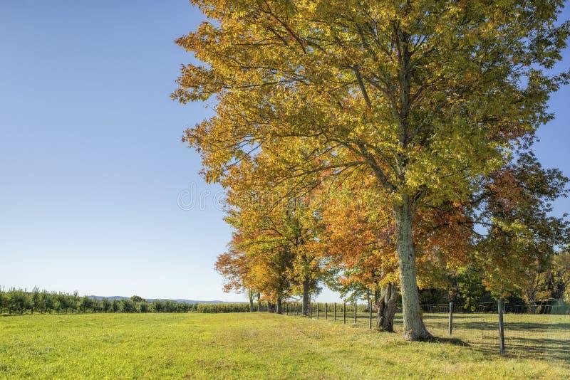 Baumreihe auf einem Hügel lizenzfreie stockbilder