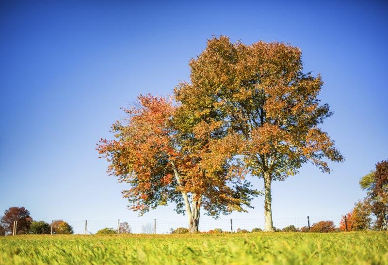 Baumreihe auf einem Hügel stockfotos