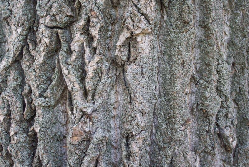 Baumrinde c ein Fleck eines gelben Moosabschlusses oben entfernt mittels HDRs stockfoto