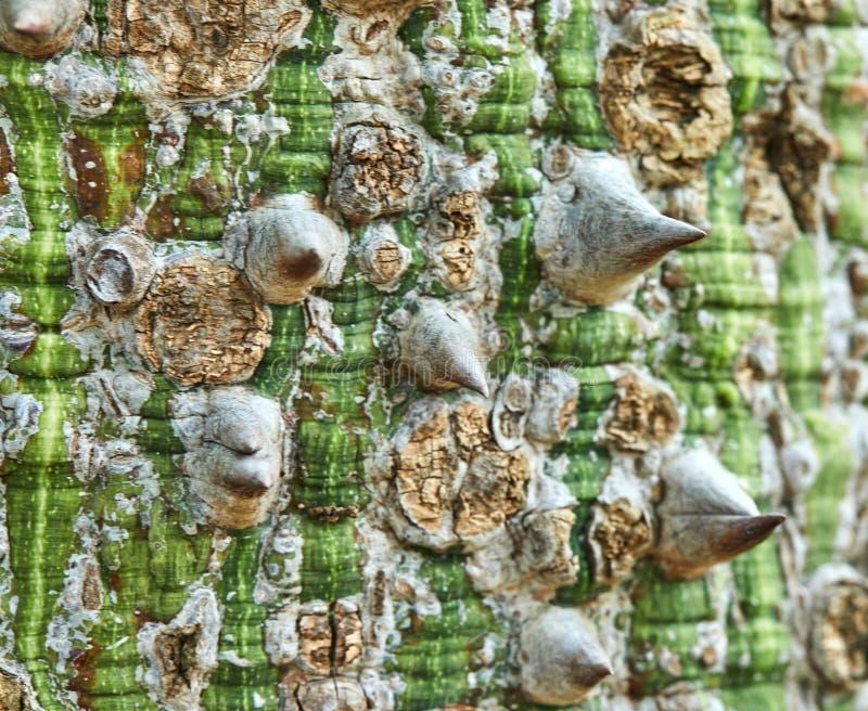 Baumrinde in den grünen braunen Tönen stockbild