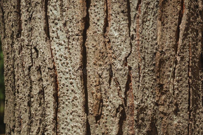Baumrinde, die einen einzigartigen Hintergrund in einem Park von Madrid bildet lizenzfreies stockbild