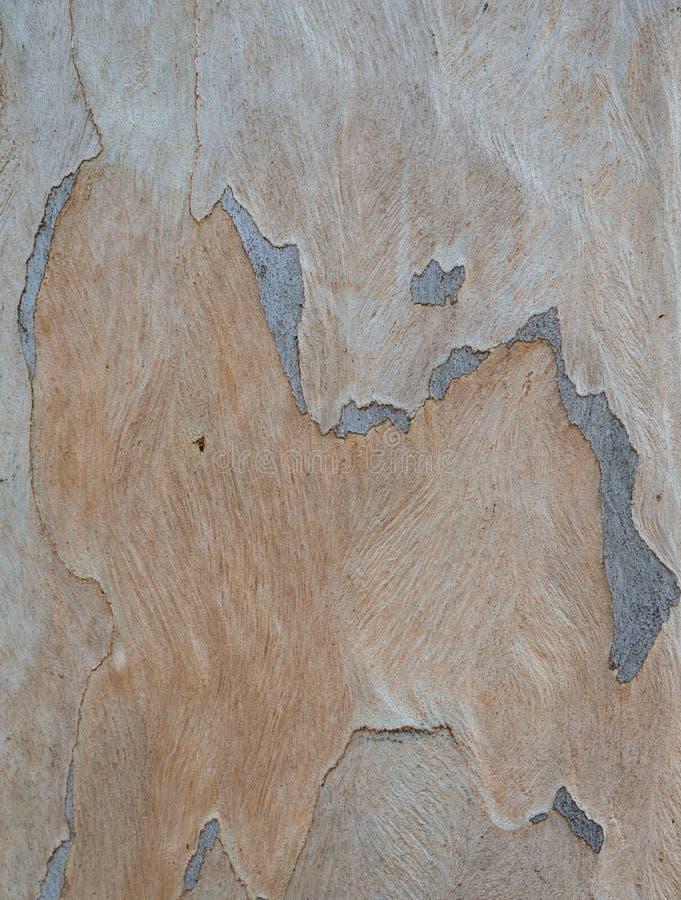 Baumrinde-Hintergrund stockfotos