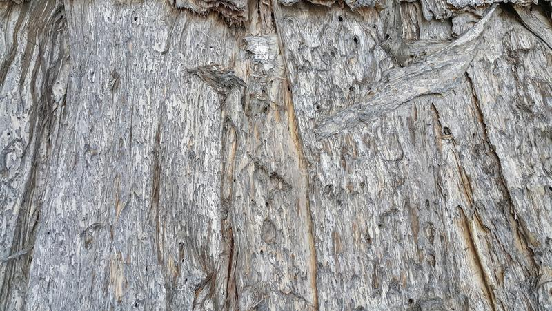 Baumrinde-Hintergrund lizenzfreie stockfotografie