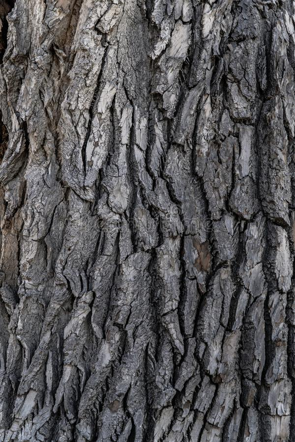 Baumrinde-Hintergrund-Beschaffenheit lizenzfreie stockfotos