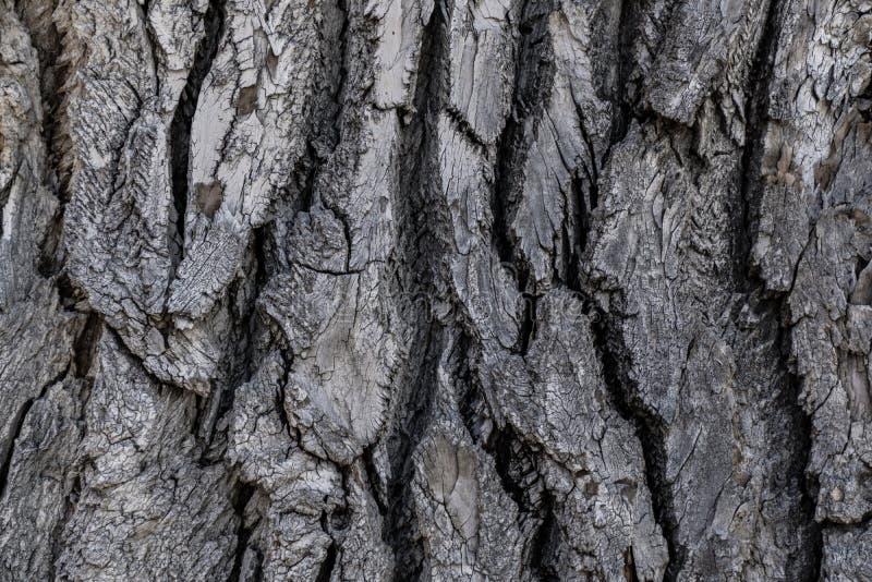 Baumrinde-Hintergrund-Beschaffenheit stockfotografie