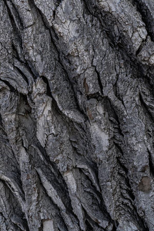 Baumrinde-Hintergrund-Beschaffenheit stockbild