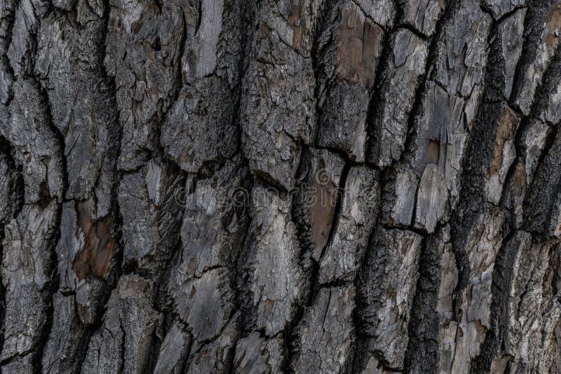 Baumrinde-Hintergrund-Beschaffenheit lizenzfreie stockbilder