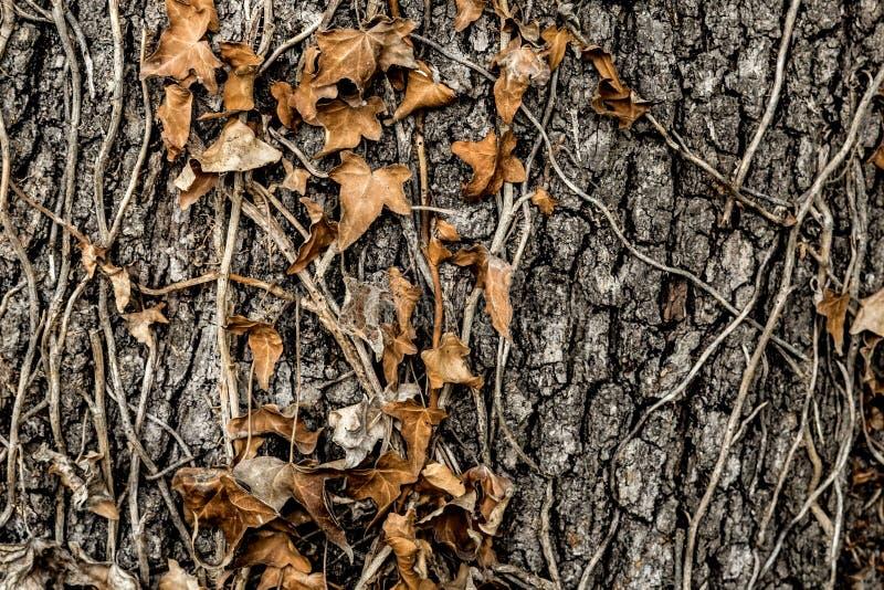 Baumrinde mit Blättern stockbilder